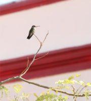 Fotografía de Fauna Urbana